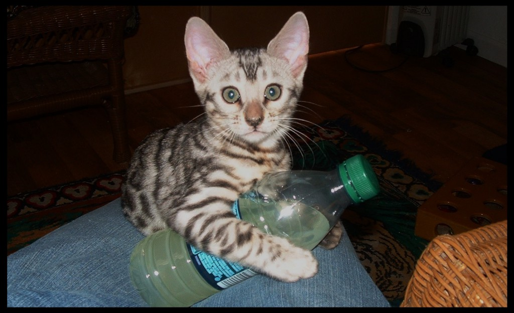 01-06-18, Bengal with water bottle