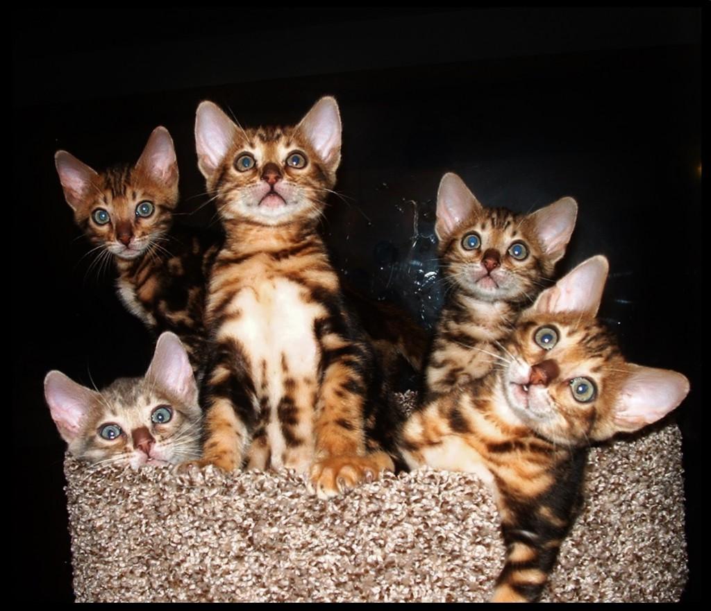 01-06-18, Cassie kittens