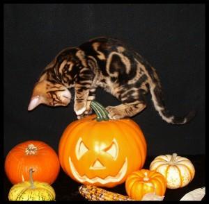 01-06-18, Rascal on pumpkin