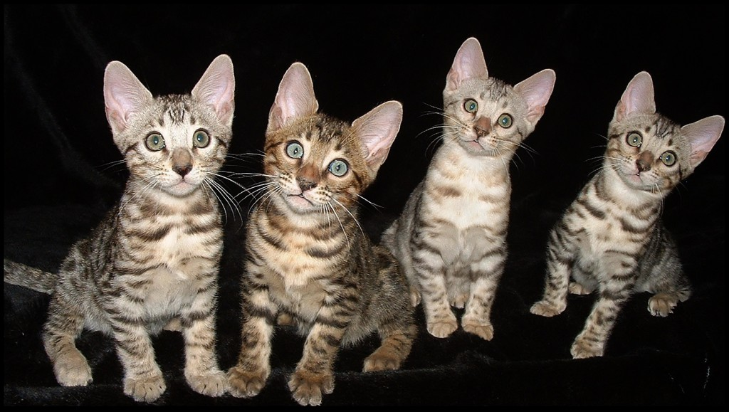 01-06-18, four Bengal kids