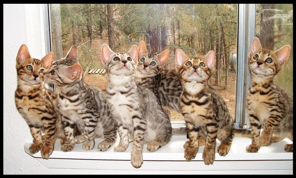 01-06-18, kittens in window sill
