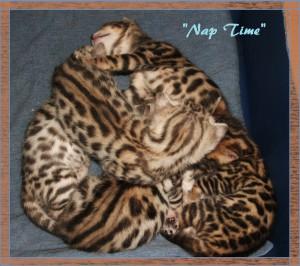 04-20-19, 2 week kittens! 002