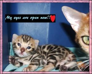 04-20-19, 2 week kittens! 010