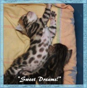 04-20-19, 2 week kittens! 026