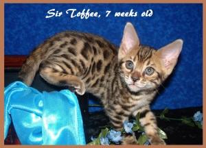 04-30-15, Abbie 6 boys, 7 weeks! 015