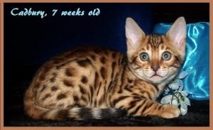 04-30-15, Abbie 6 boys, 7 weeks! 021
