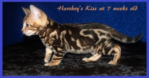 04-30-15, Abbie 6 boys, 7 weeks! 058