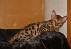 07-17-16, RainDrops kittens at 12 weeks! 003