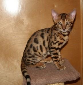 07-17-16, RainDrops kittens at 12 weeks! 016