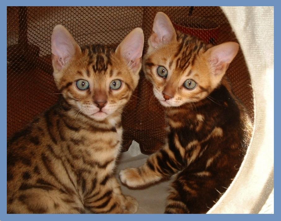10-08-17, Abbie's 6 week kittens 006