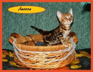 Aurora basket2