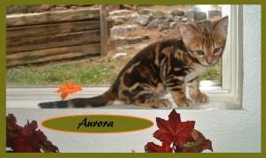 Aurora in window 3