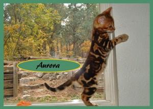 Aurora stretching