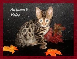 Autumn's Valor second four