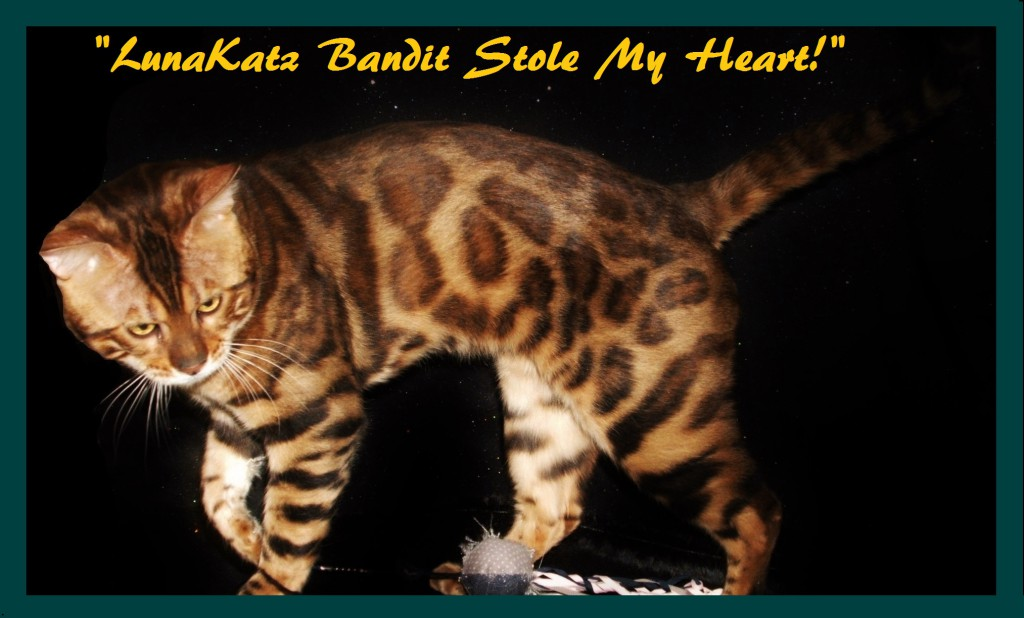 Bandit Stole My Heart! 1 year old