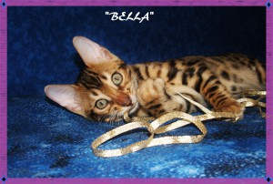 Bella, little diva