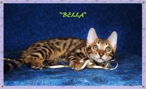 Bella, surprised