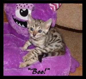 Boo! On purple monster bed
