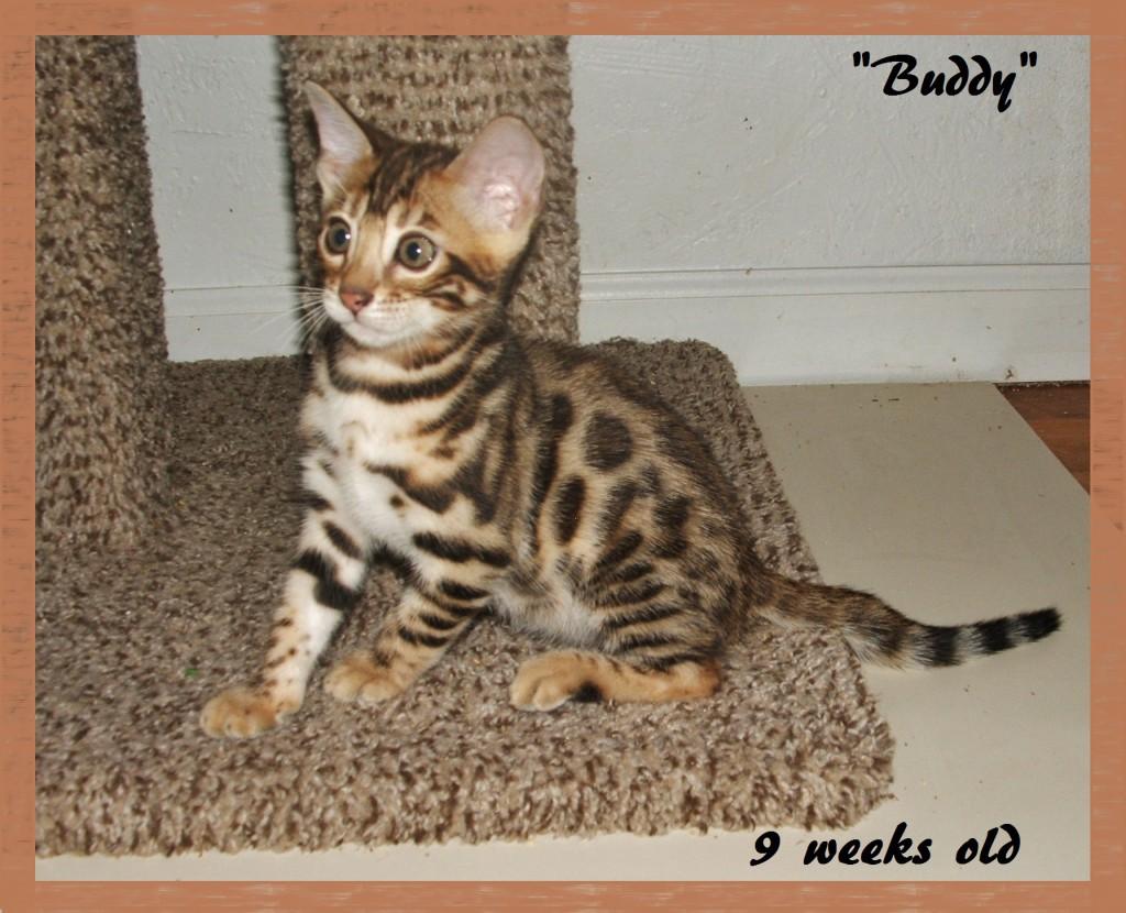 Buddy, 9 weeks old