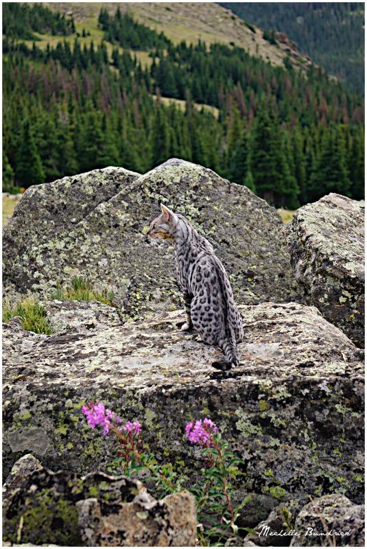 Buddy enjoying the mountain view