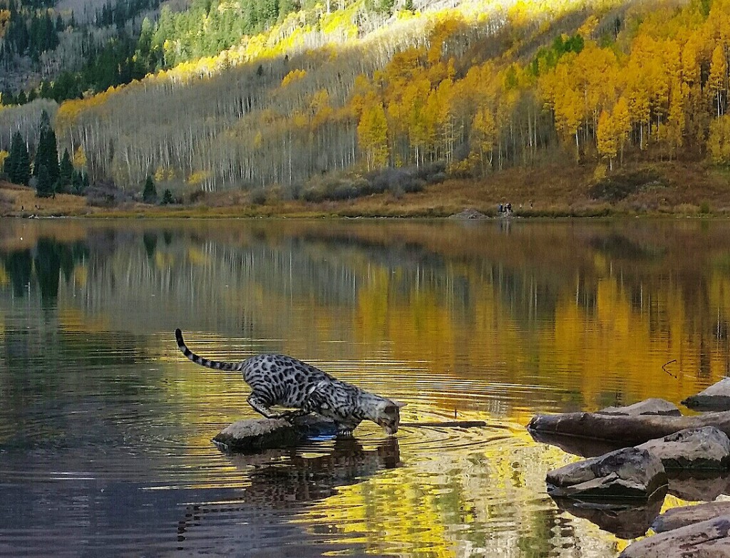 Buddy in Aspen, Colorado playing in the lake #1