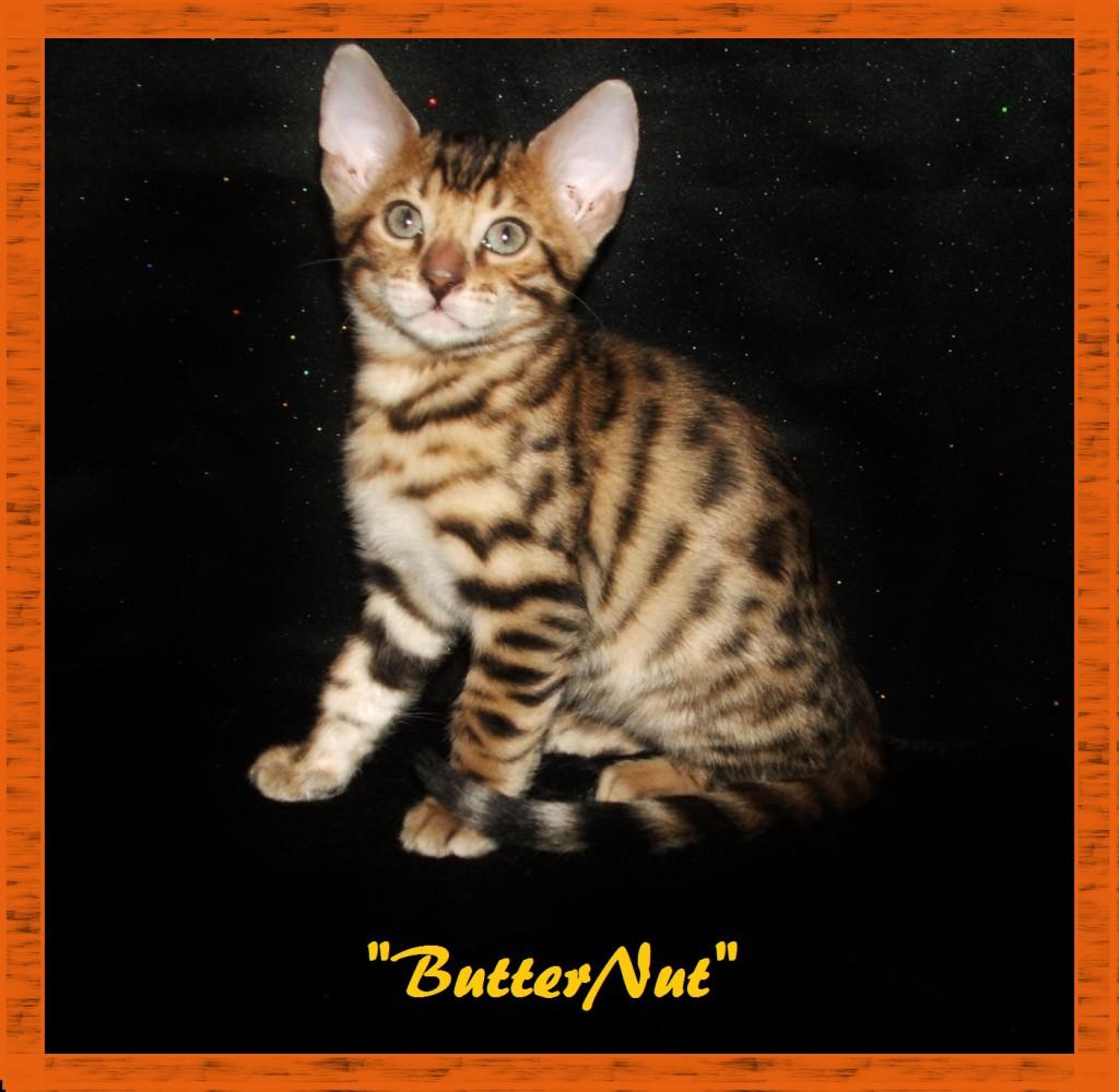 ButterNut, handsome boy