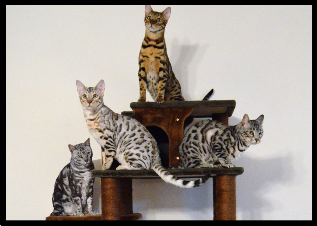 Cat Condo group