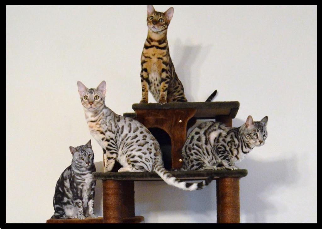 Cat Condo group