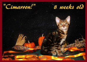 Cimarron, Harvest 2