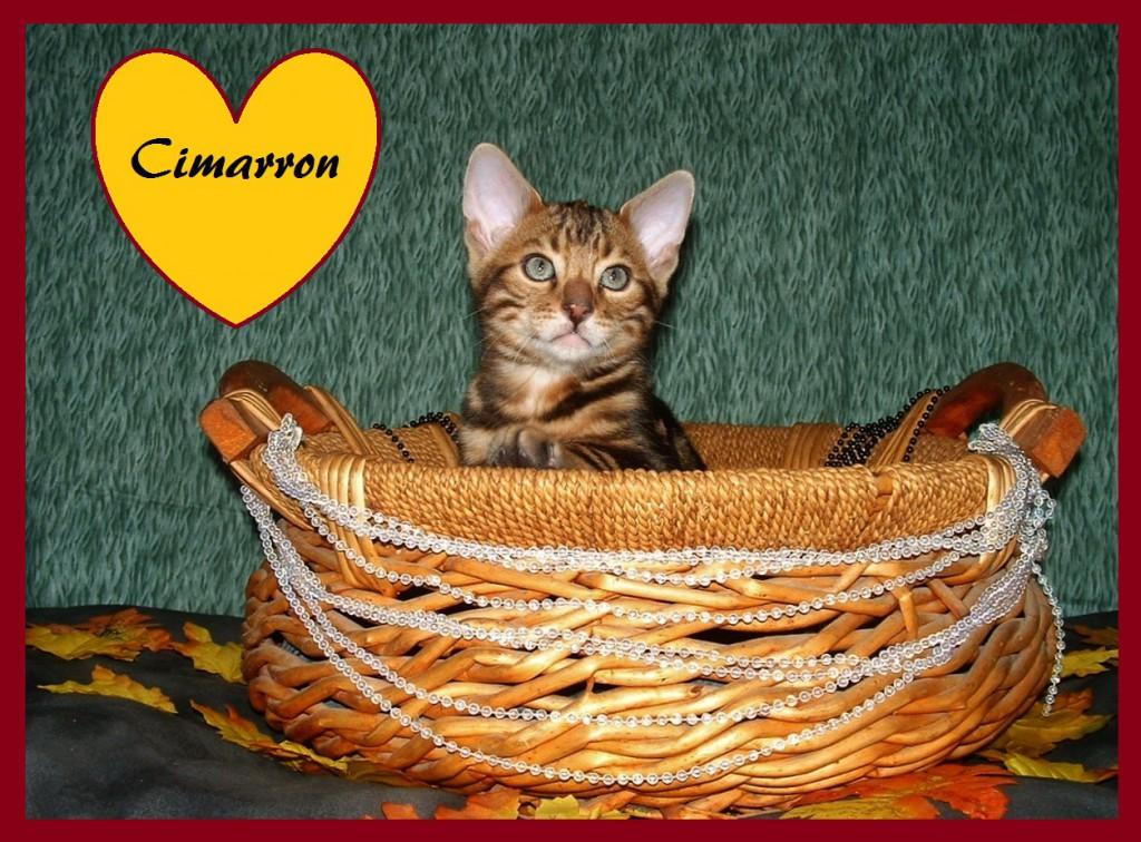 Cimarron basket1