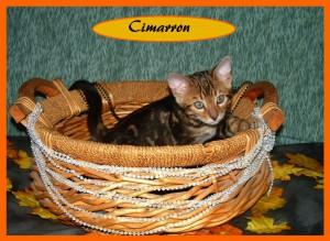 Cimarron basket2