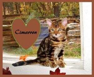 Cimarron in the window