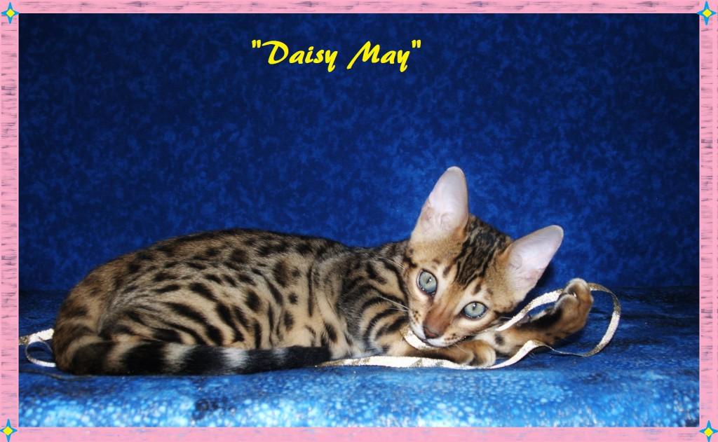 Daisy May, adorable