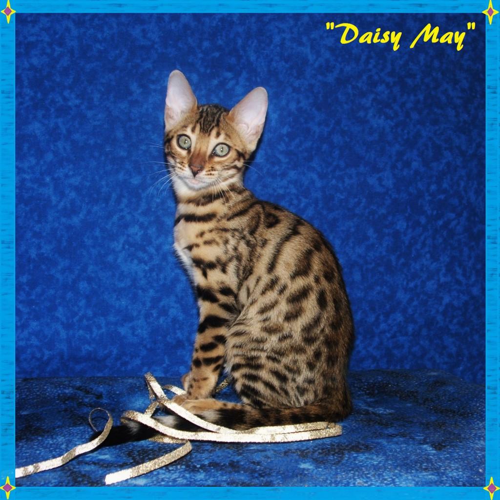 Daisy May, sweet