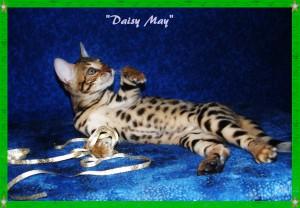 Daisy May, tummy