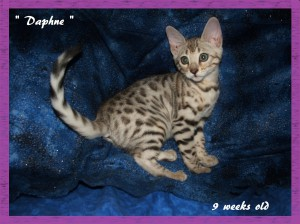 Daphne, princess
