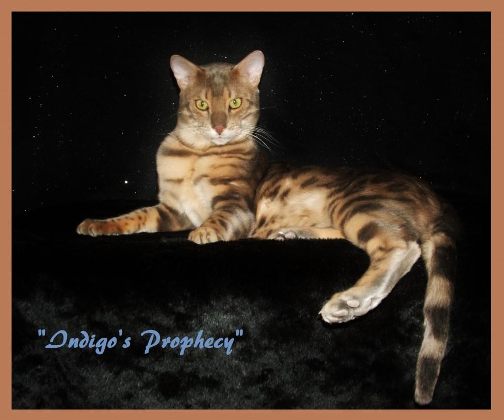 Indigo, distinguished