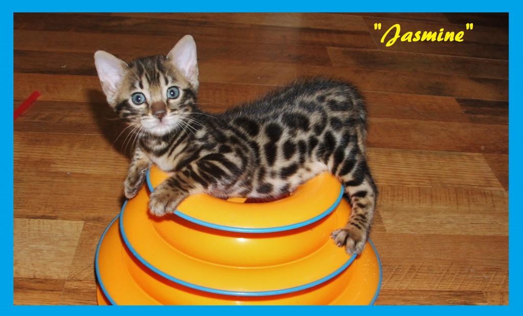 Jasmine too cute