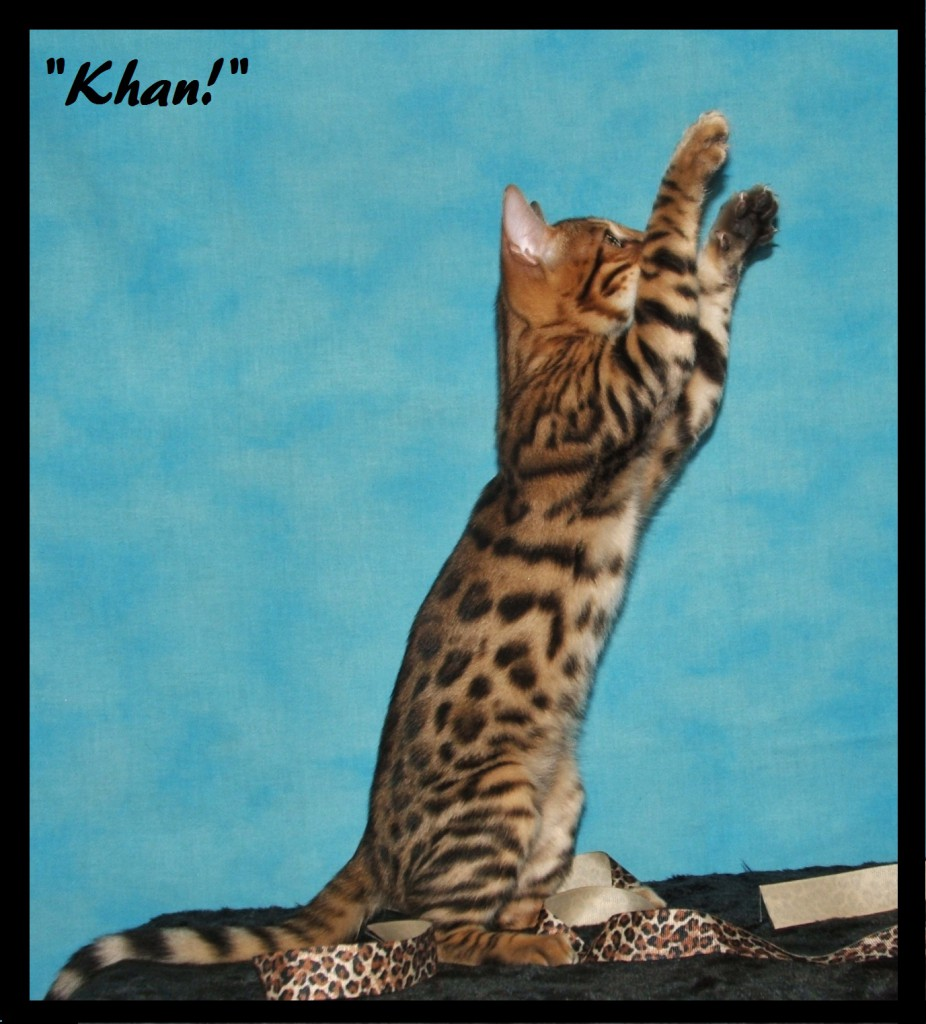 Khan, both paws up
