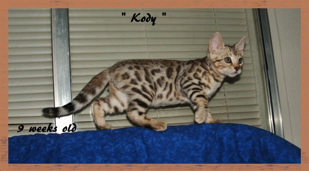 Kody, side profile