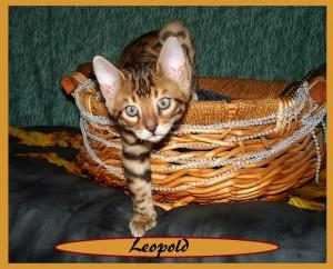 Leopold basket1