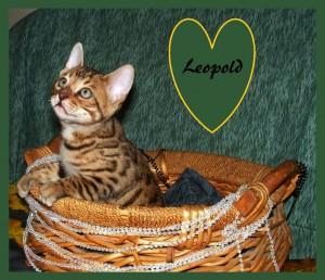 Leopold basket2