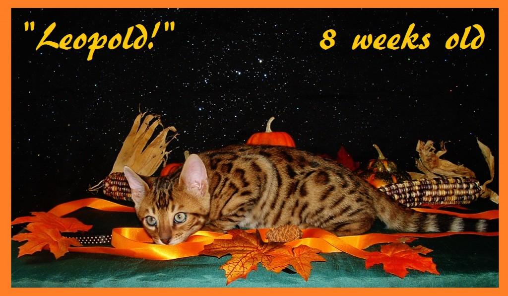 Leopold, harvest 1