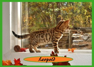 Leopold in the window