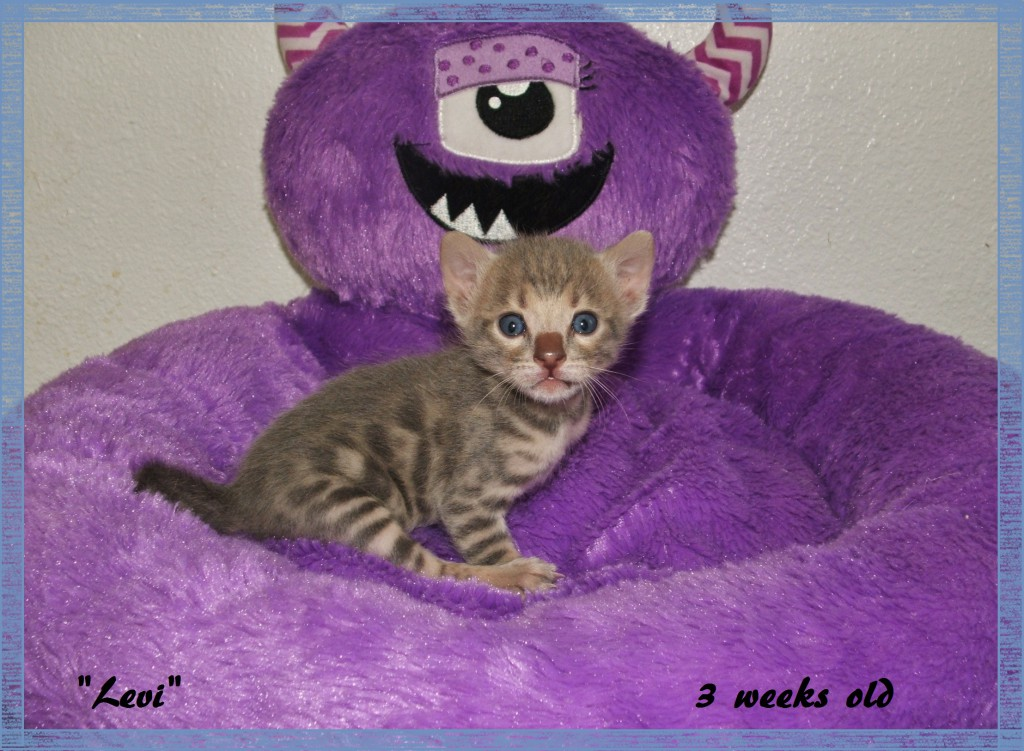 Levi, 3 weeks old