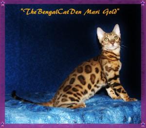 Mari Gold, sitting pretty, 4 months