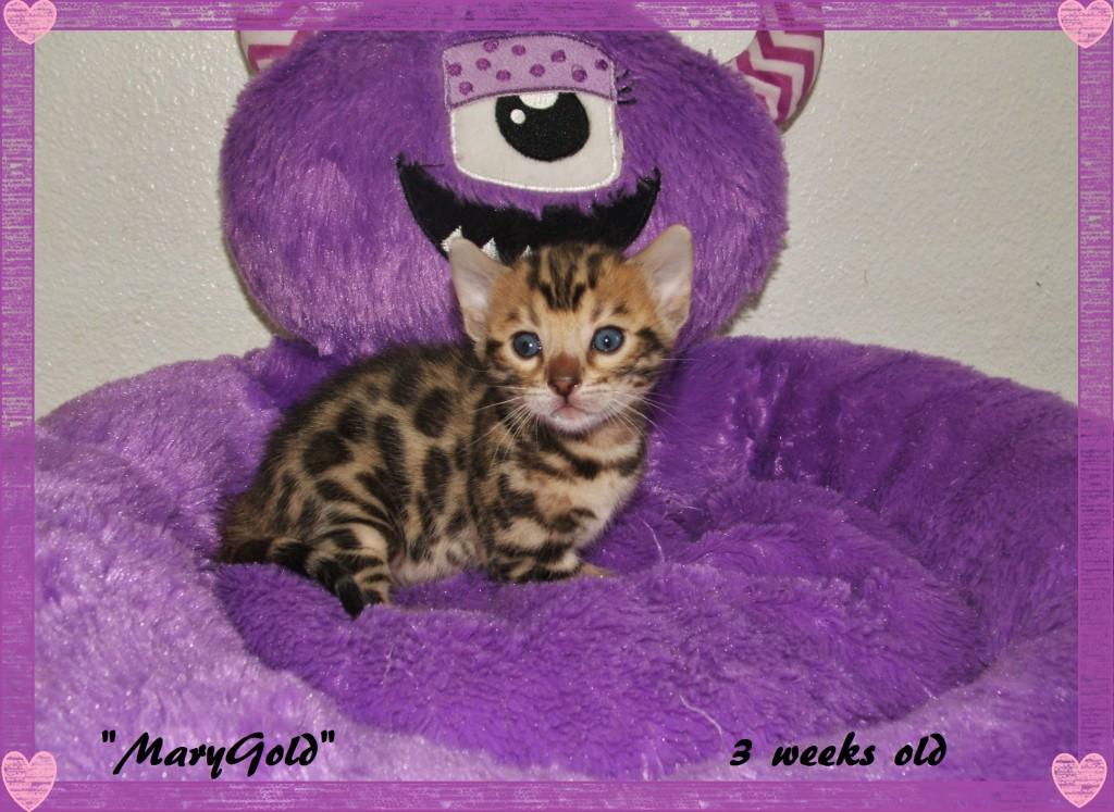 MaryGold, 3 weeks