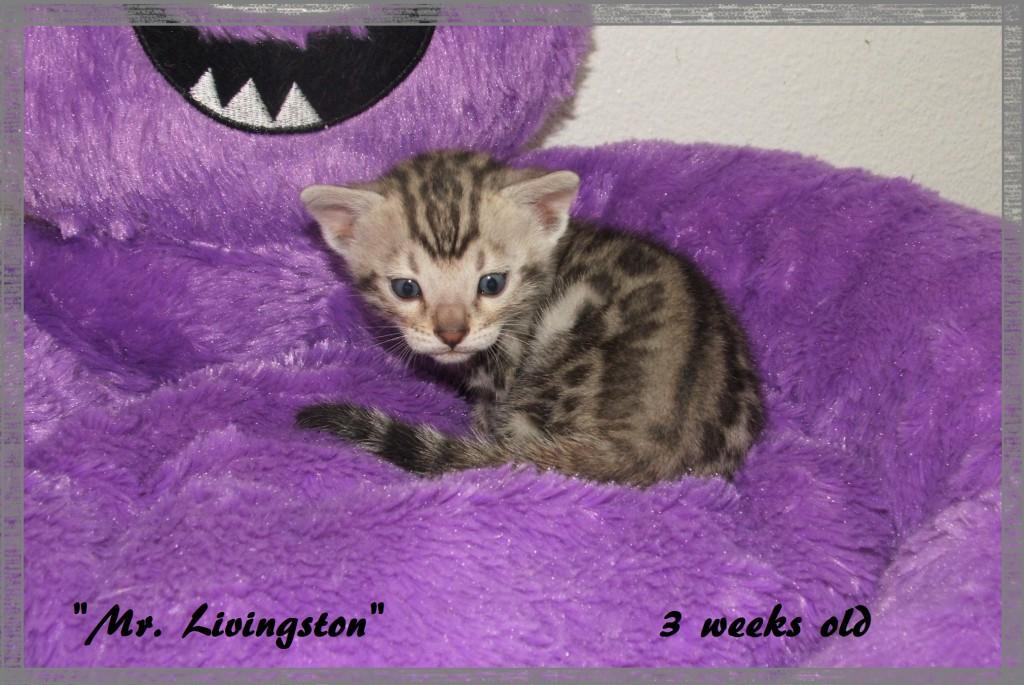 Mr. Livingston, 3 weeks