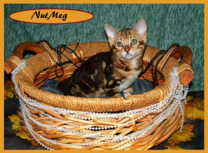 NutMeg basket1