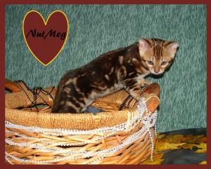 NutMeg basket2
